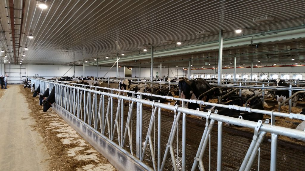Robotic Milking Dairy Barn